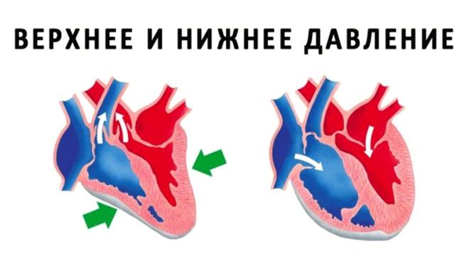 Какая разница между нижним и верхним давлением считается нормой