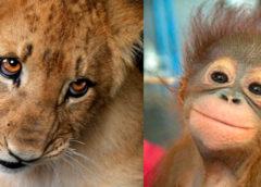 Подборка снимков смешных животных для настроения